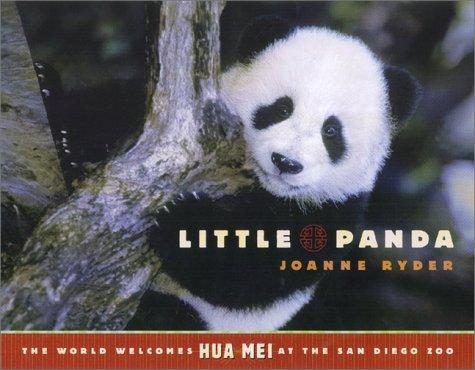 Download Little Panda